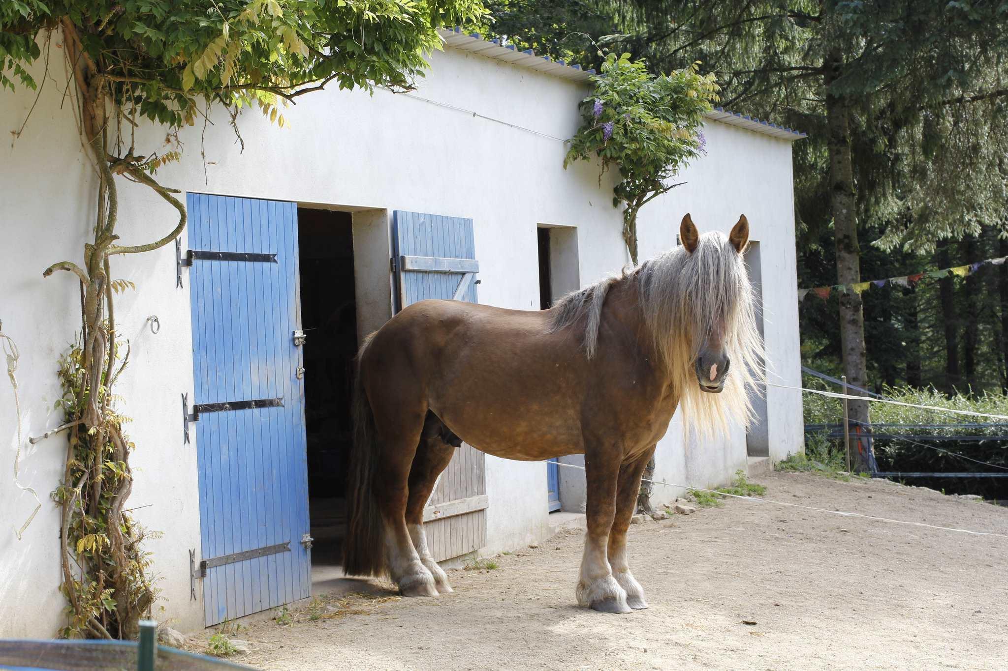 Sire devant les écuries des chevaux d'arcand