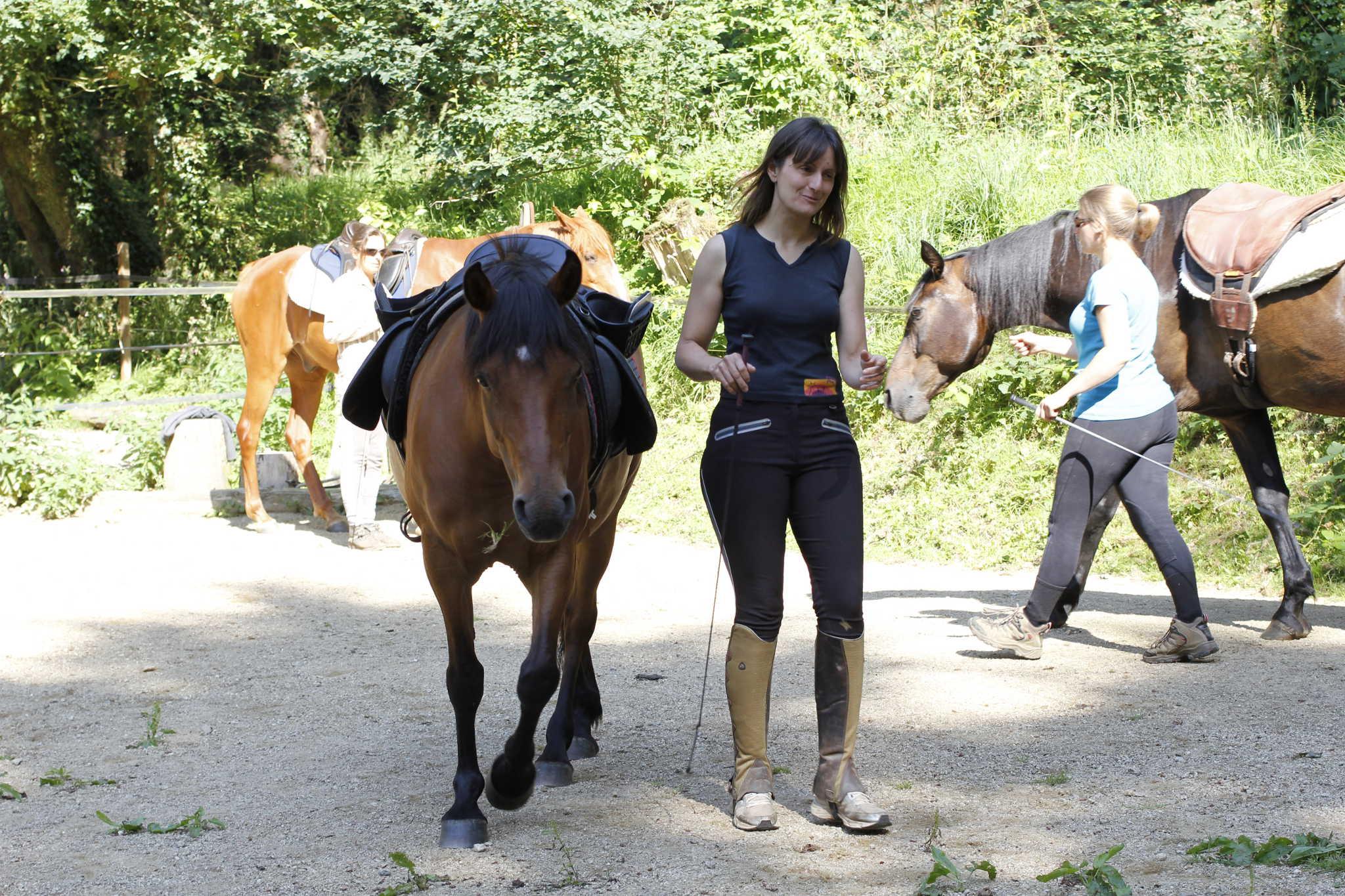 cours à trois chevaux en liberté au sol