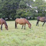 chevaux darcand – 001