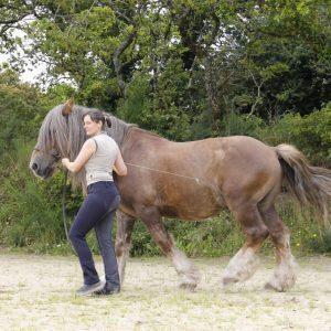 chevaux darcand