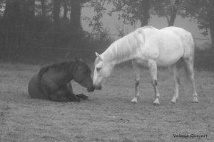 chevaux ne se taisent jamais